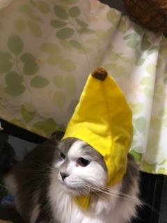 バナナ琥珀.png